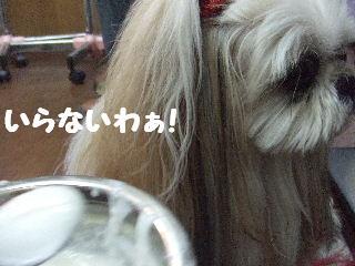 2010_01080191.jpg