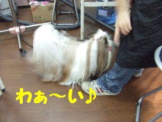 2010_01150096.jpg