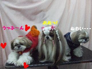 2010_01150119.jpg