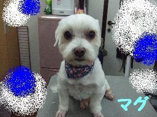 2010_02030040.jpg