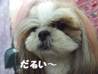 2010_02220019.jpg