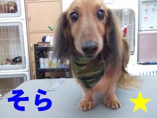 DSCF3257.jpg