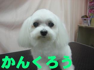 DSCN0219.jpg