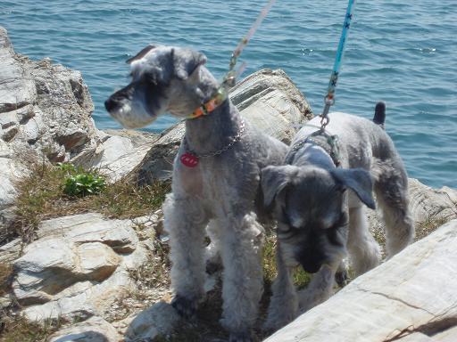 海と犬01