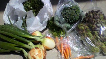 m新鮮野菜