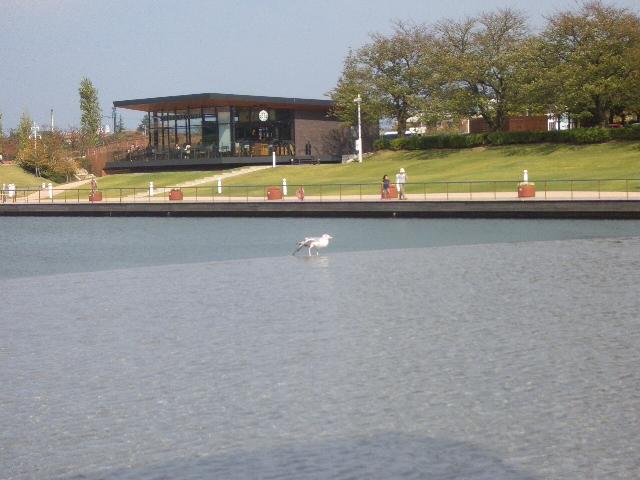 環水公園 鳥