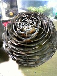 ヒマラヤ杉1
