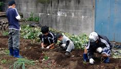 子供達が掘る芋