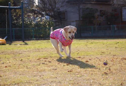 20091208fujiyama6.jpg