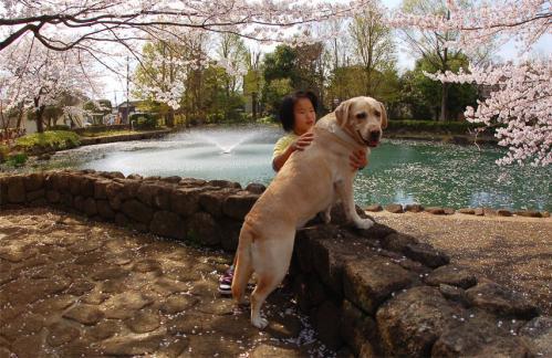 20100410sayamaike4.jpg