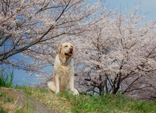 20100411hamura1.jpg
