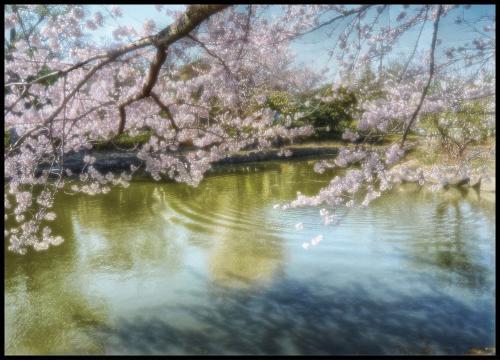 hdr20110412sayamaikea.jpg