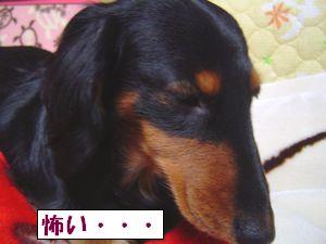 20100115-5.jpg