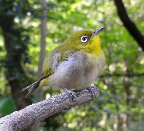#5 流木の鳥