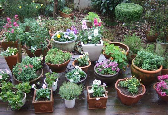 20091212 新年にむけて ベランダの花鉢 002 19cm