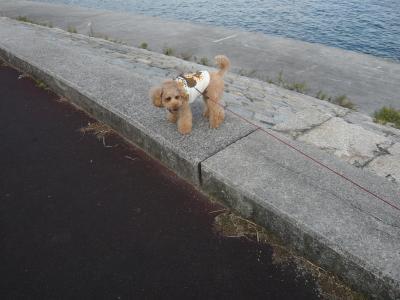 潮のカホリ~