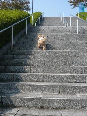 階段も平気!