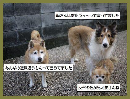 きっぷ2 (2)