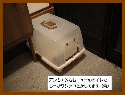 まいごちゃん2 (2)