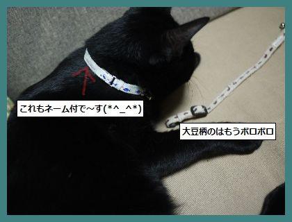ゆたんぽ2 (1)