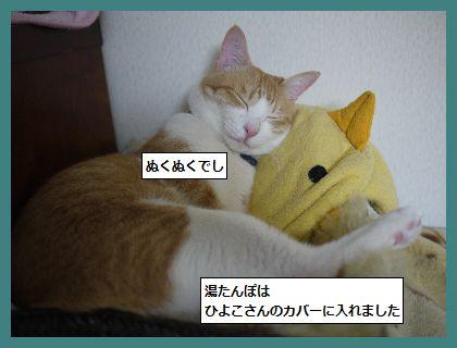 ゆたんぽ2 (2)