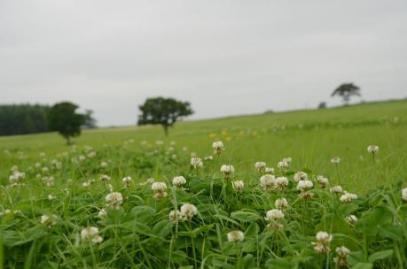 標茶町 牧草地
