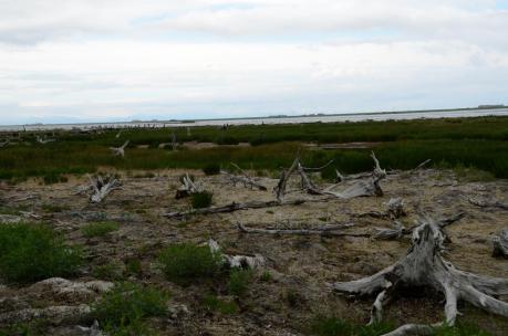 野付半島 トドワラ