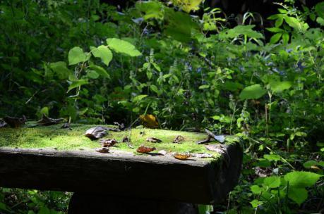 六花亭   六花の森