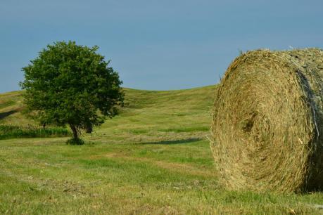 鶴居村の牧草ロール