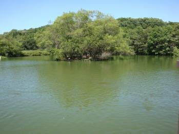 ハクチョウ池