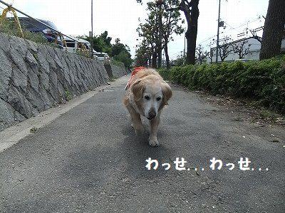 20120518-1.jpg