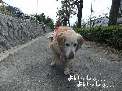 20120518-3.jpg