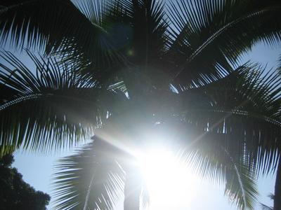 sun-9.jpg