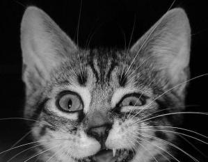 kusso cat2