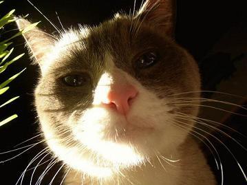 cat112.jpg