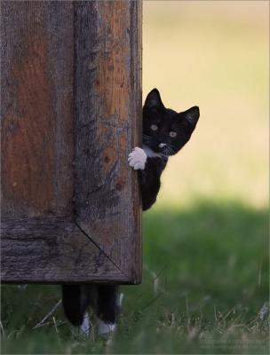 pblcat.jpg