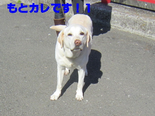 IMG_1750 (500x375)