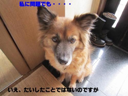 IMG_2416 (500x375)