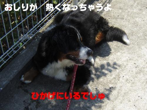 IMG_3525 (500x375)