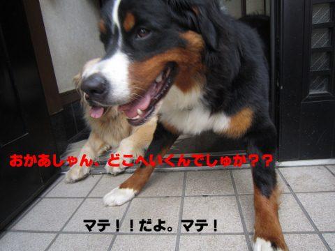 IMG_0024 (480x360)