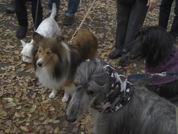 DogShelter2009Nov29-c