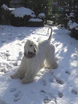 Snow2010Jan-b