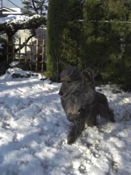 Snow2010Jan-e