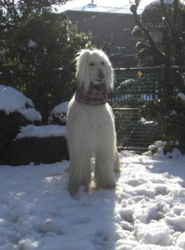 Snow2010Jan-h
