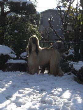Snow2010Jan-j