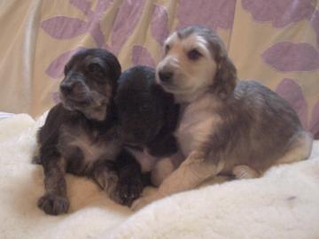 Puppy2009Dec5