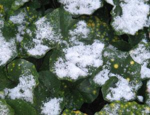 2010.2.7雪blog01