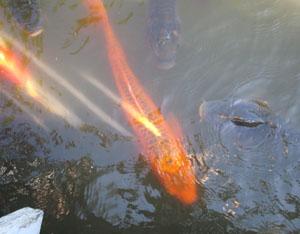 井の頭公園blog04