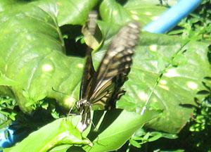 真昼の蝶blog02