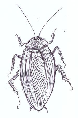 ゴキブリblog02
